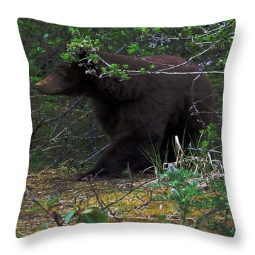 03162015 Black Bear Alaska Throw Pillow