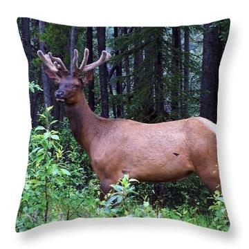 062505 Elk In Velvet Throw Pillow