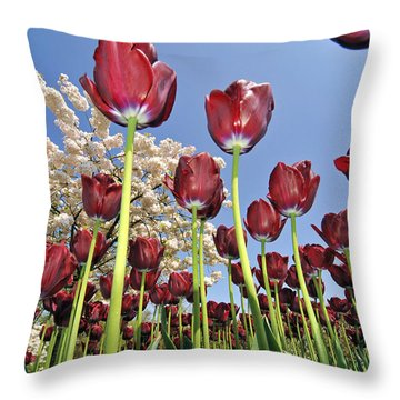 Throw Pillow featuring the photograph 090416p029 by Arterra Picture Library