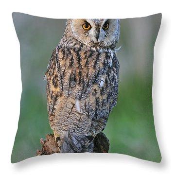 090811p316 Throw Pillow