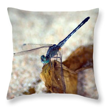 Blue Dragonfly Throw Pillow by Michelle Meenawong