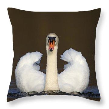 121012p165 Throw Pillow