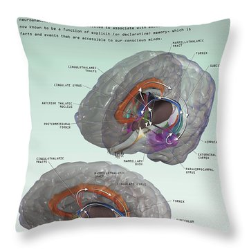3d Illustration Of The Papez Circuit Throw Pillow