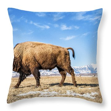 A Bison In The 24,700-acre National Elk Throw Pillow