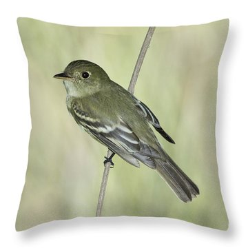 Acadian Flycatcher Throw Pillow by Anthony Mercieca