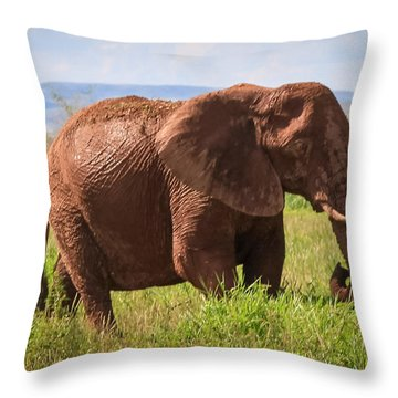 African Desert Elephant Throw Pillow