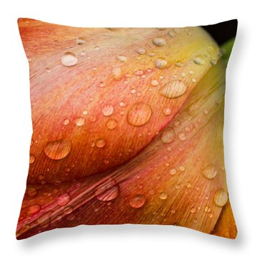 After The Rain Throw Pillow by Sara Frank