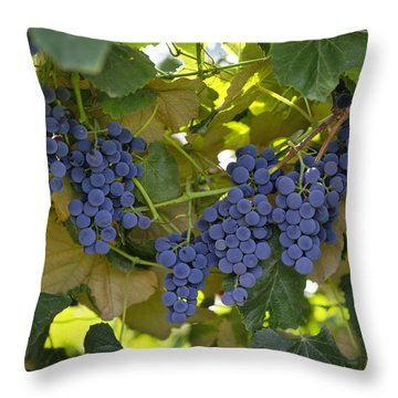 Agriculture - Concord Tablejuice Grapes Throw Pillow by Gary Holscher