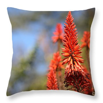 Aloe Succotrina  Throw Pillow by Nicholas Burningham