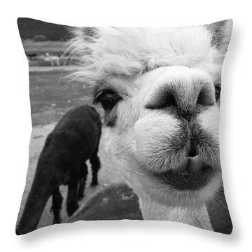 Alpaca Face Throw Pillow