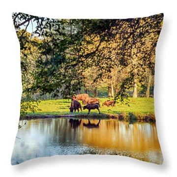 American Bison Throw Pillow by Sennie Pierson