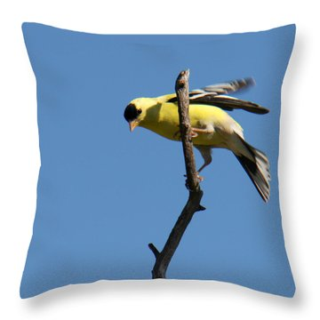 American Goldfinch Throw Pillow by Bob and Jan Shriner