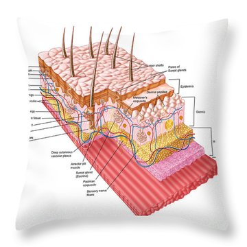Anatomy Of The Human Skin Throw Pillow by Stocktrek Images
