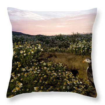 Atlantic Puffin At Burrow Skomer Island Throw Pillow by Sebastian Kennerknecht