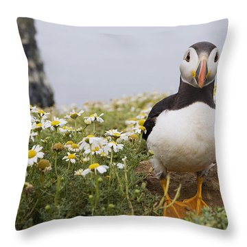 Atlantic Puffin In Breeding Plumage Throw Pillow