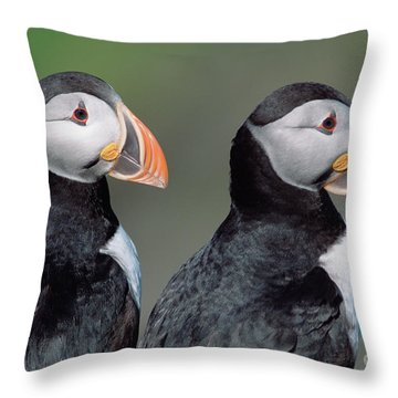 Atlantic Puffins In Breeding Colors Throw Pillow by Yva Momatiuk and John Eastcott