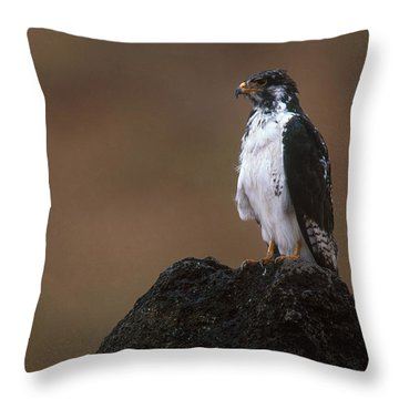 Augur Buzzard Throw Pillow by Art Wolfe