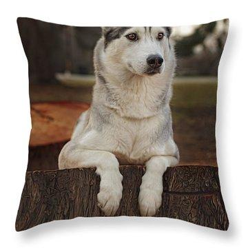 Aurora Throw Pillow by Brian Cross