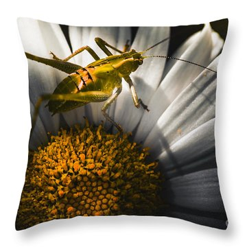 Australian Grasshopper On Flowers. Spring Concept Throw Pillow by Jorgo Photography - Wall Art Gallery