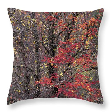 Throw Pillow featuring the photograph Autumn's Palette by Alan L Graham