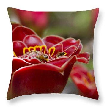 Awapuhi Ko 'oko'o  Torch Ginger - Etlingera Elatior - Phaeomeria Magnifica  Throw Pillow by Sharon Mau
