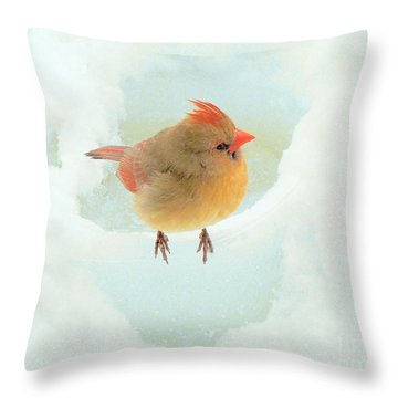 Baby Female Cardinal Throw Pillow by Janette Boyd