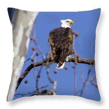Bald Eagle 2 Throw Pillow by David Lester