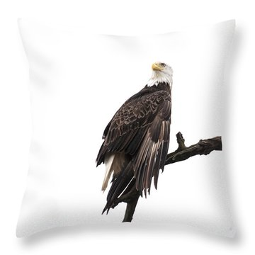 Bald Eagle 5 Throw Pillow by David Lester