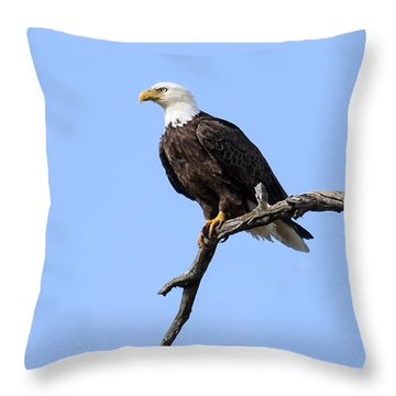 Bald Eagle 6 Throw Pillow by David Lester