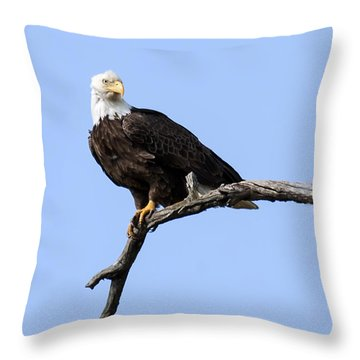 Bald Eagle 7 Throw Pillow by David Lester