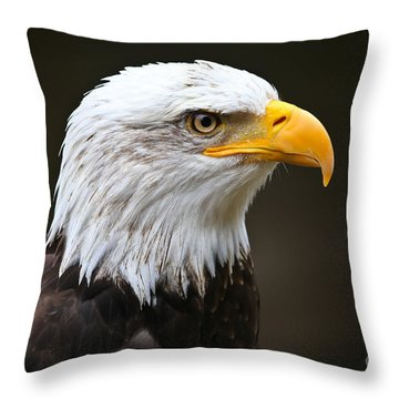 Majestic Bald Eagle  Throw Pillow by John Roberts