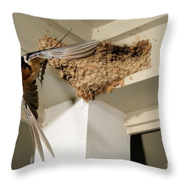 Barn Swallow Throw Pillow by Scott Linstead