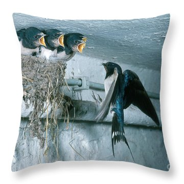 Barn Swallows Throw Pillow by Hans Reinhard