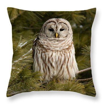 Barred Owl In A Pine Tree. Throw Pillow