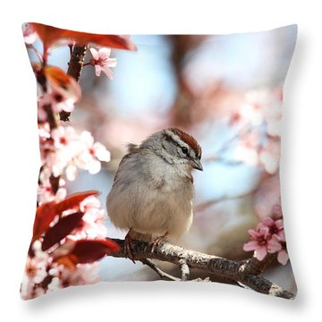 Beautiful Sparrow Throw Pillow