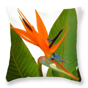 Bird Of Paradise Throw Pillow by Peg Urban