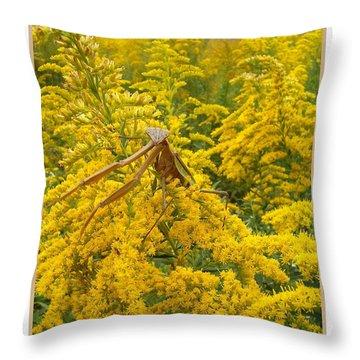Blending In Throw Pillow by Sara  Raber