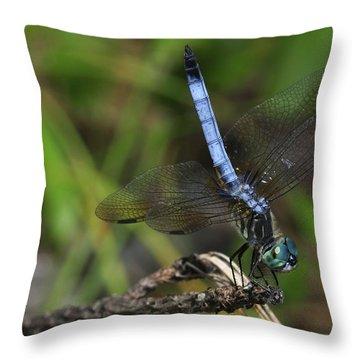 Blue Dasher Throw Pillow by J Scott Davidson