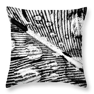Feather Throw Pillow by Jason Michael Roust