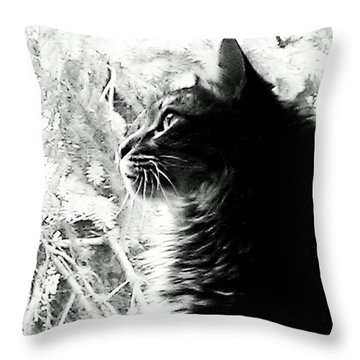 Throw Pillow featuring the photograph Bo by Jacqueline McReynolds