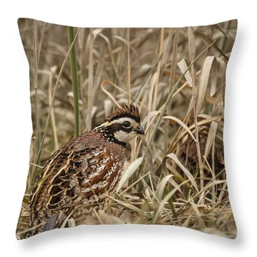 Bobwhite Quail Throw Pillow