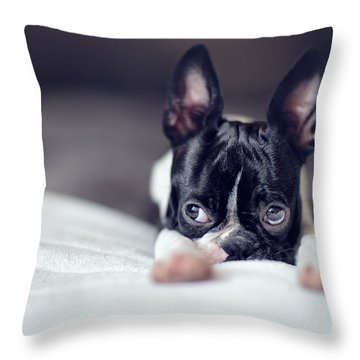 Boston Terrier Throw Pillows