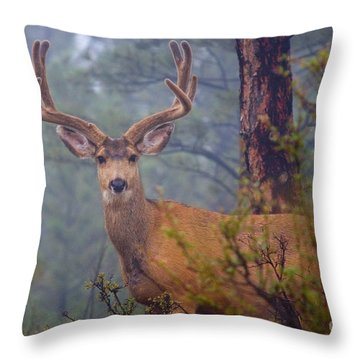 Buck Deer In A Mystical Foggy Forest Scene Throw Pillow