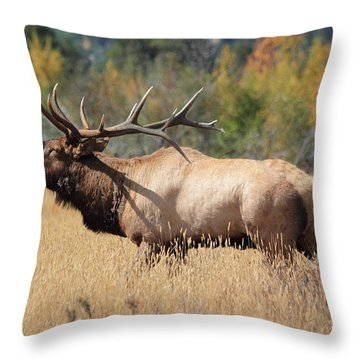 Bugling Bull Throw Pillow