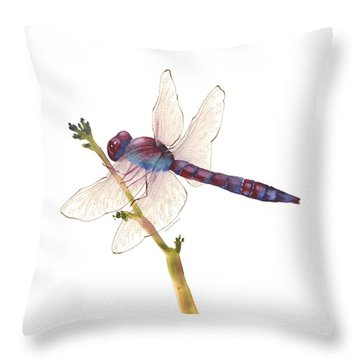 Burgundy Dragonfly  Throw Pillow
