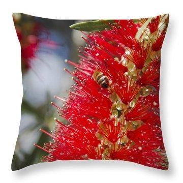 Callistemon Citrinus - Crimson Bottlebrush Throw Pillow by Sharon Mau
