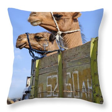 Camels At The Ashgabat Sunday Market In Turkmenistan Throw Pillow by Robert Preston