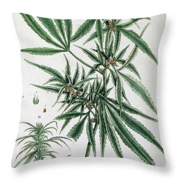Cannabis  Throw Pillow by Elizabeth Blackwell