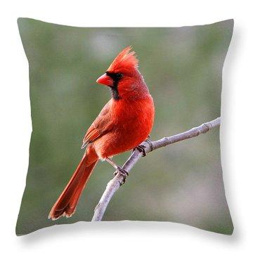 Throw Pillow featuring the photograph Cardinal by John Freidenberg