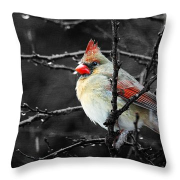 Throw Pillow featuring the photograph Cardinal On A Rainy Day by Trina  Ansel